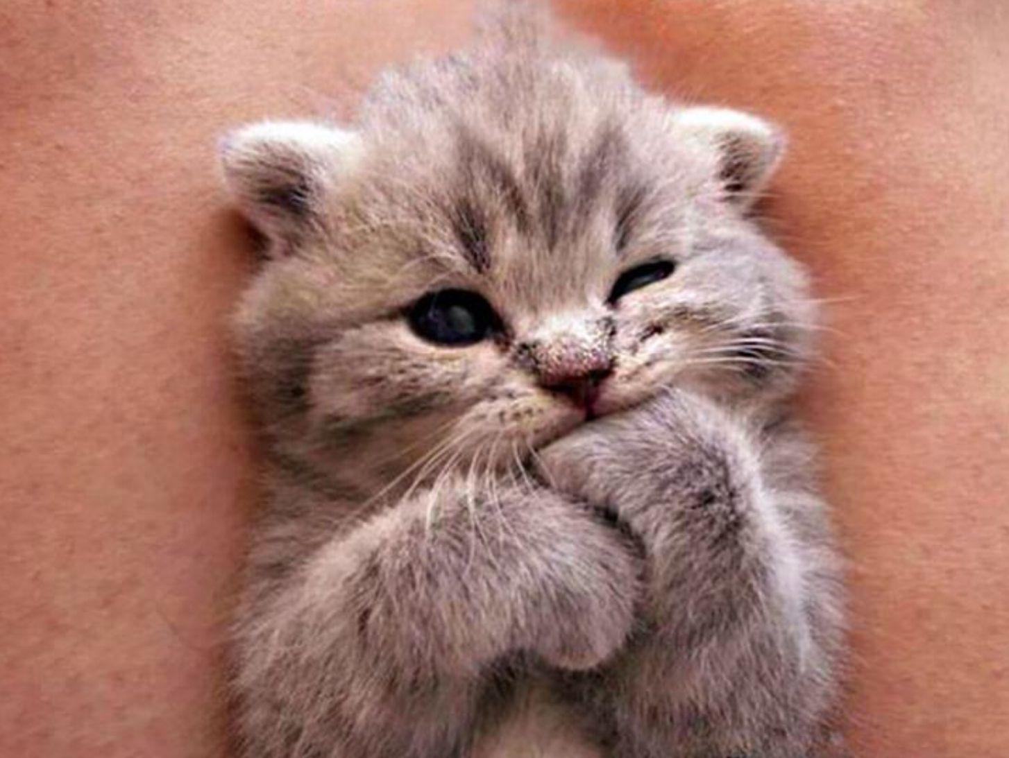 Pin By Katie Nguyen On My Name Is Give Me Aa Hoiyaaaaaaaaaa Cutest Kittens Ever Kittens Cutest Kitten Pictures