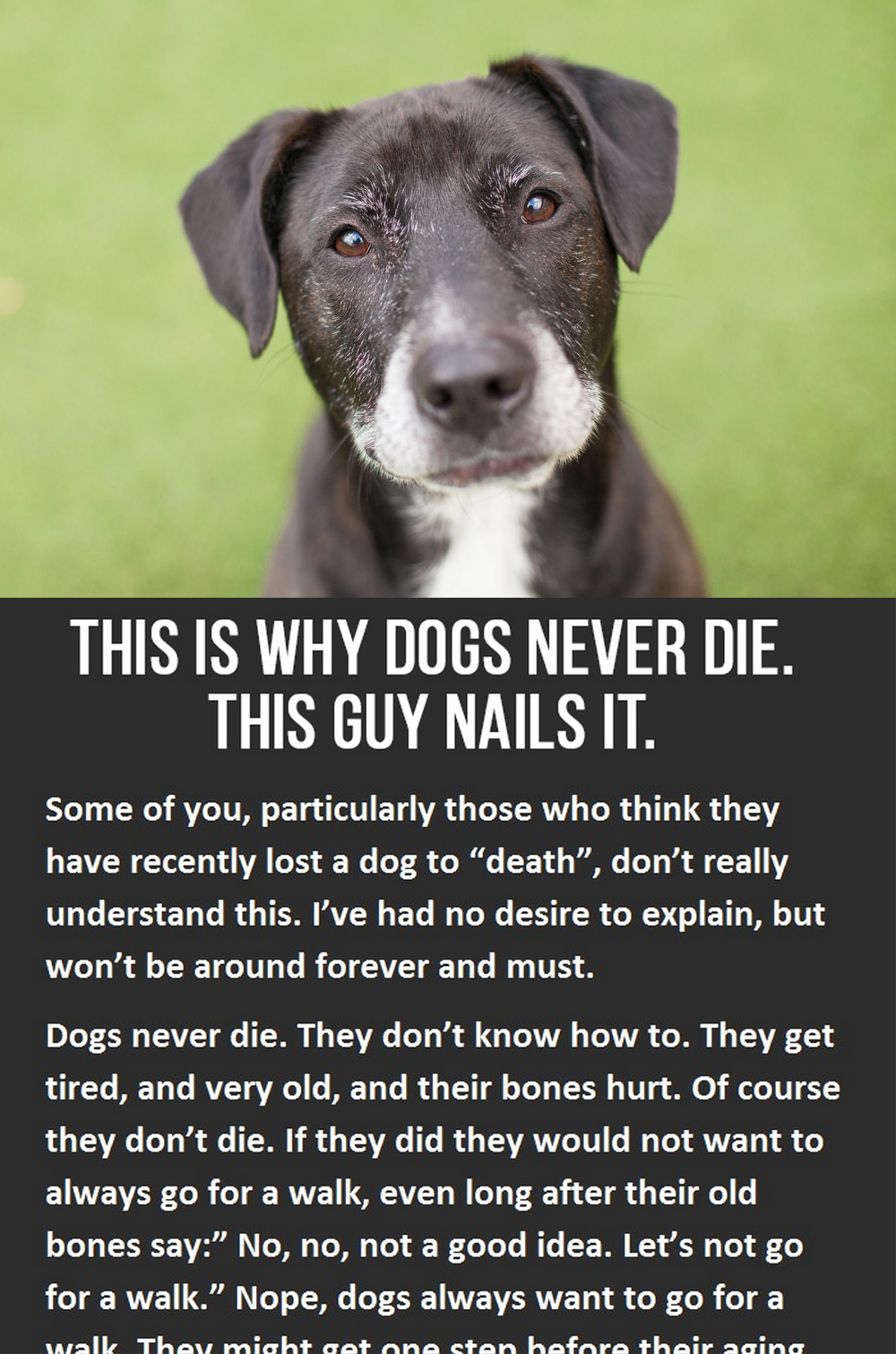 This is why dogs never die dog animal and doggies for Is fish good for dogs