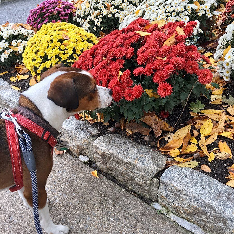 What Sometimes I like to stop and smell the flowers even though I have allergies DOGMa