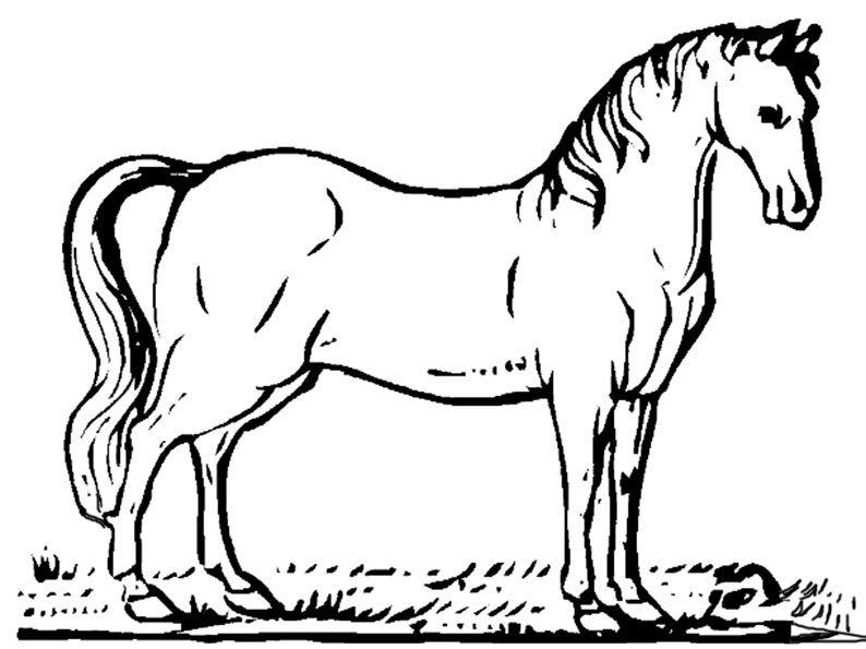 Ausmalbilder pferde 31g 794595 horses pinterest farming life ausmalbilder pferde 31g 794595 thecheapjerseys Images