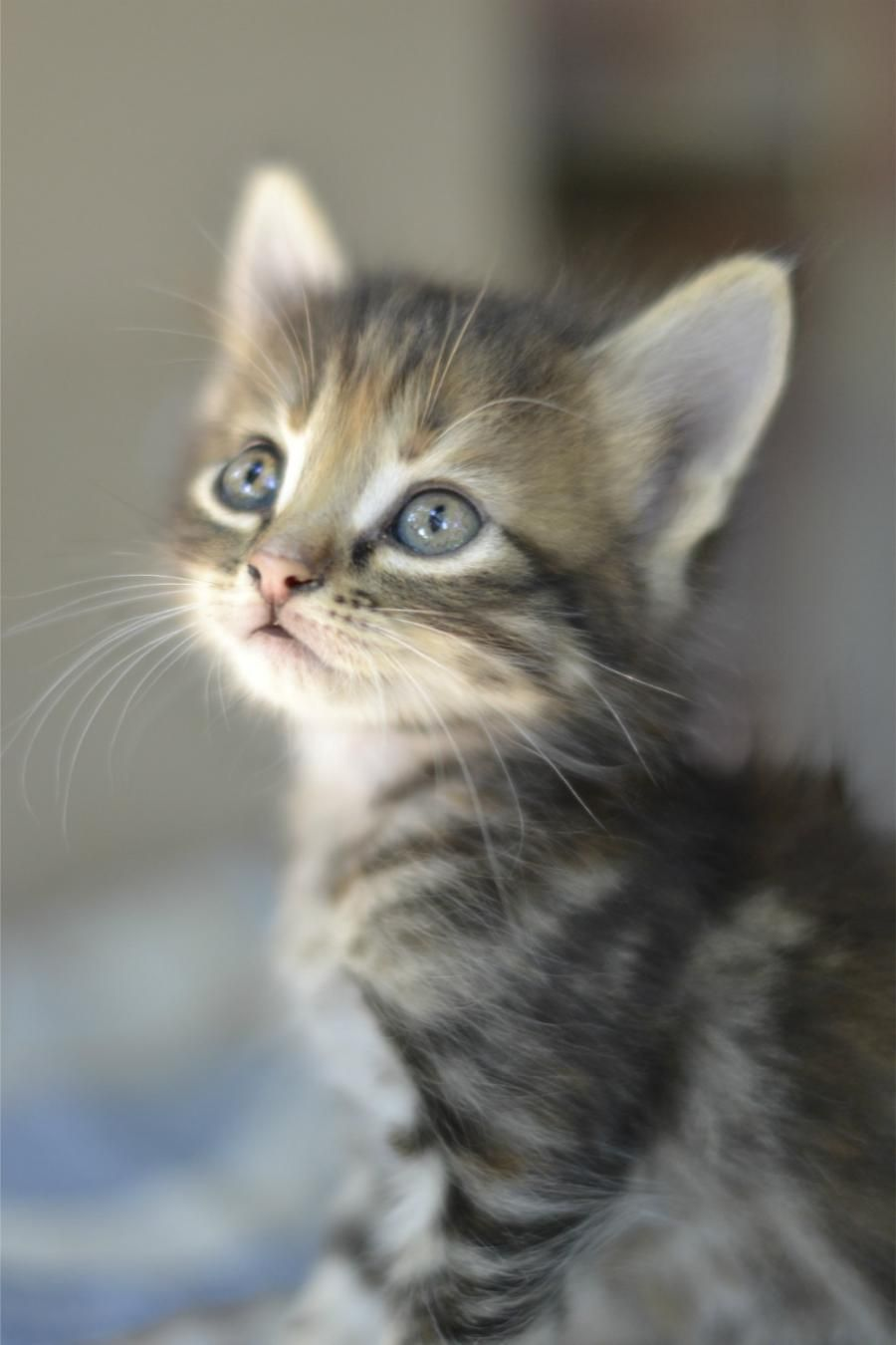 One Day I Will Show Up With One Of These And Jake Is Just Going To Have To Deal With It Kittens Cutest