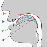 International Phonetic Alphabet Wikipedia The Free Encyclopedia Phonetic Alphabet Speech And Language Phonology