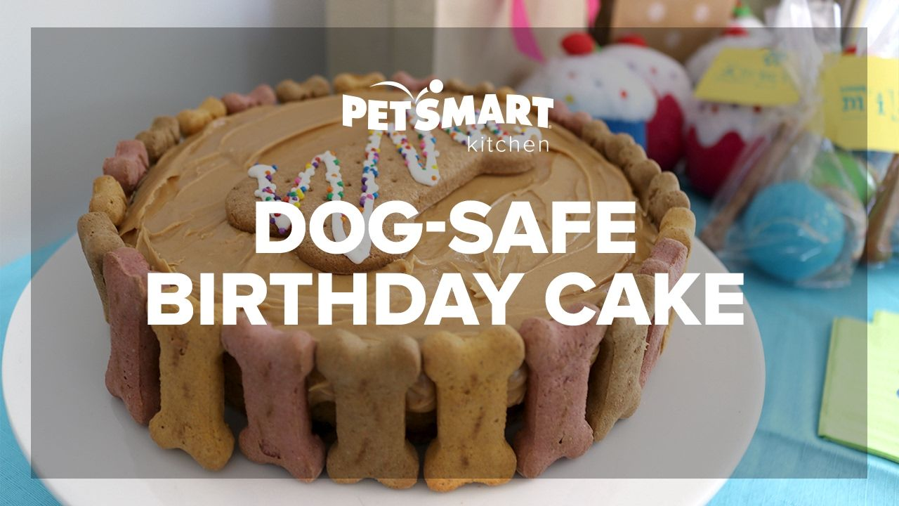 PetSmart Kitchen Doggie Birthday Cake With Photo Youtube Dog Cakes