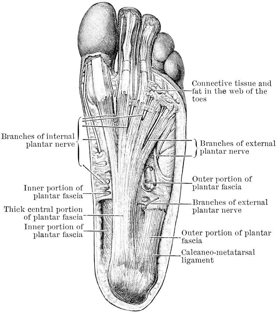 diagram of a human foot human foot diagram anatomy organ med Prosthetic Foot Diagram diagram of a human foot human foot diagram anatomy organ