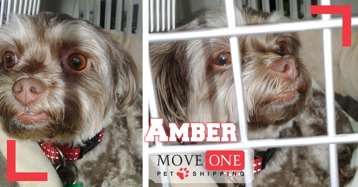 Pet Shipping Safe trip Amber. DXB to BAH Pet shipping