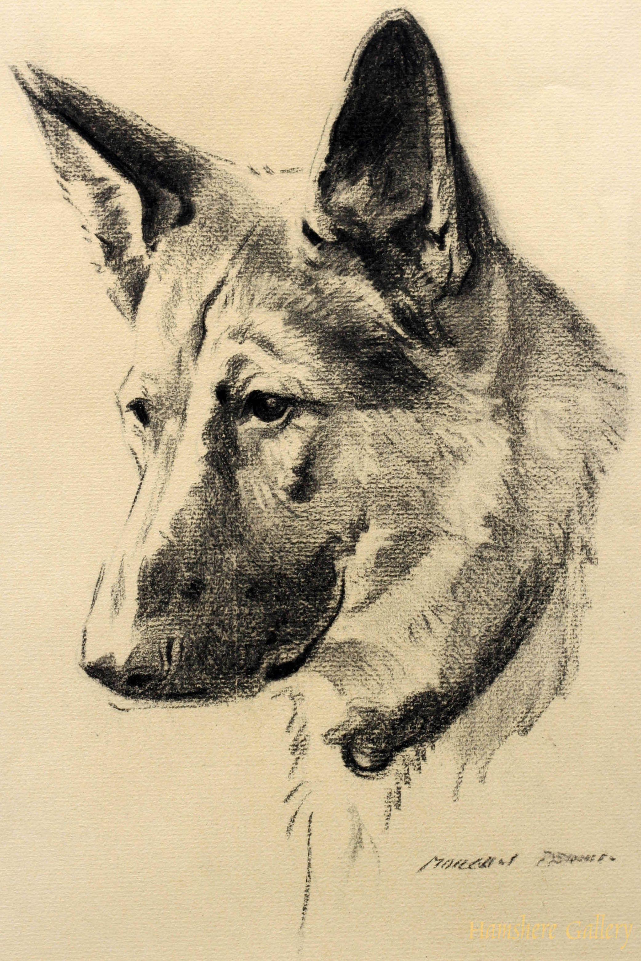 Morgan dennis illustrateur chien berger allemand - Dessin de chien berger allemand ...