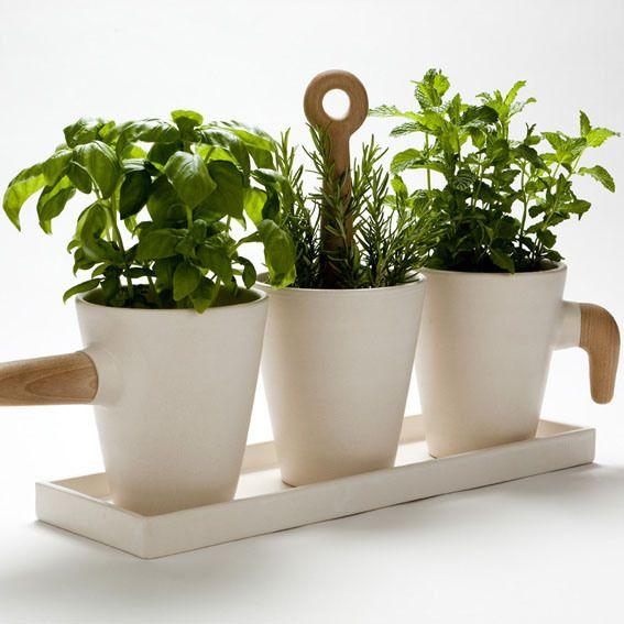 Kitchen herb pot by Cristina Toledo
