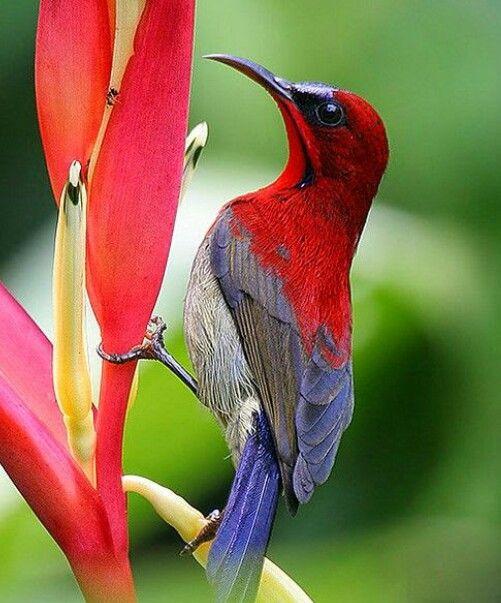 Birds Sunbird: Pin De False Crack En Birds