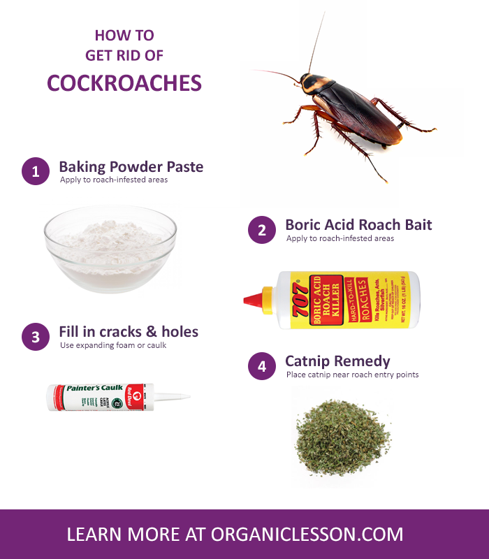 20 Simple Home Remedies To Get Rid Of Roaches Home Remedies Natural Home Remedies Natural Roach Repellent