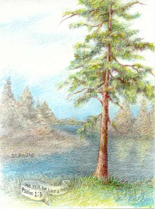 Pencil Drawings Trees Like A Tree Colored Pencil Illustration