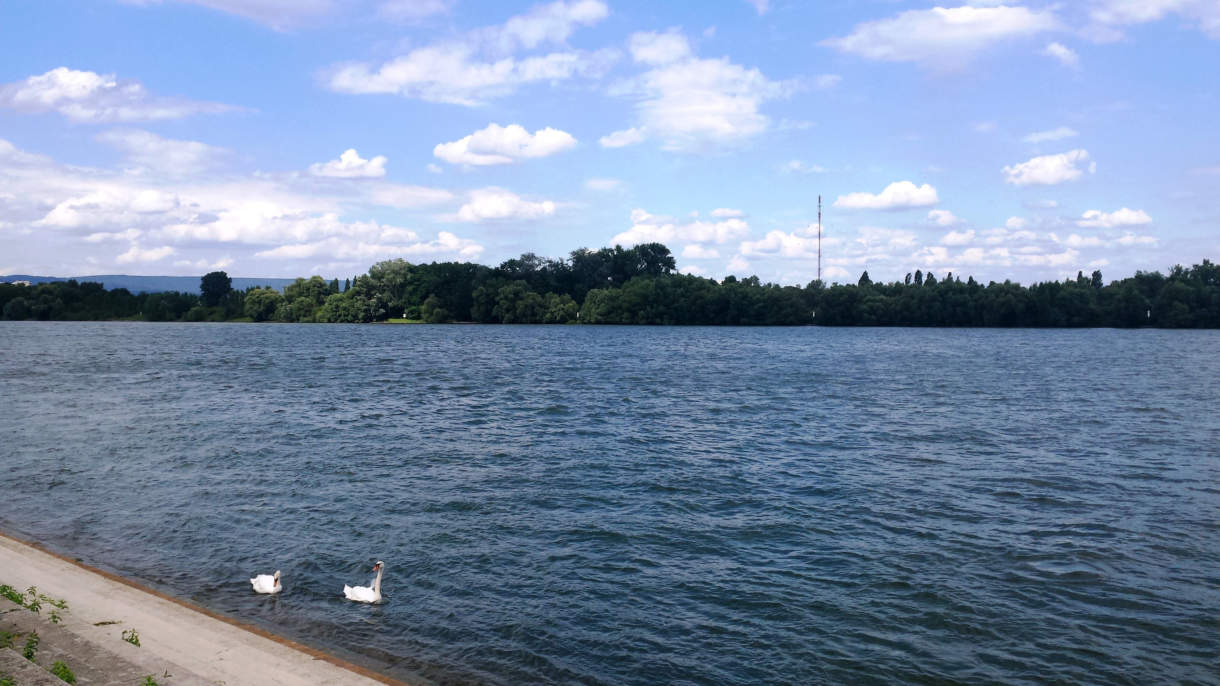 See In Der Nähe Von Mainz