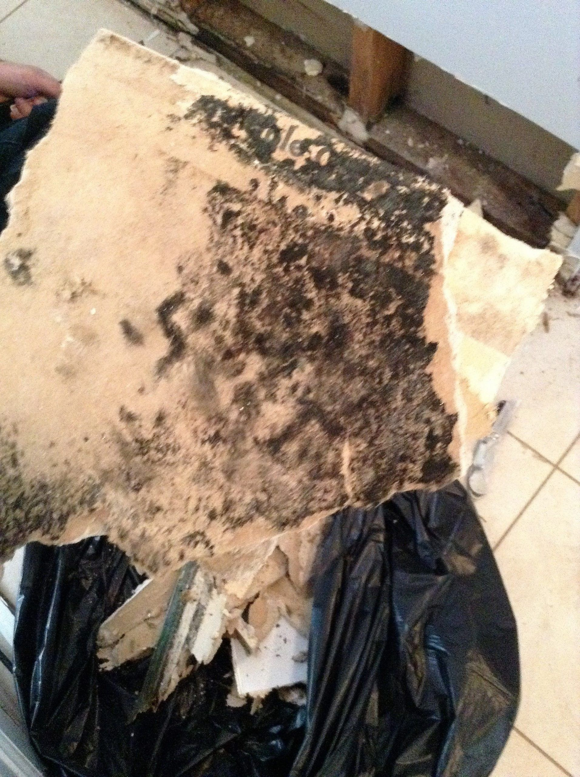 A Slow Leak Behind Kitchen Cabinets In This Brewster Ny Home Was The Source Of In 2020 With Images Mold Remover Remove Black Mold Mold And Mildew Remover