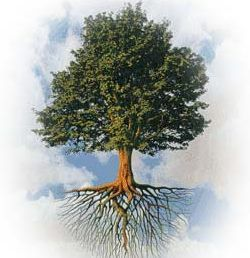 Pics For > Tree With Roots And Branches Drawing