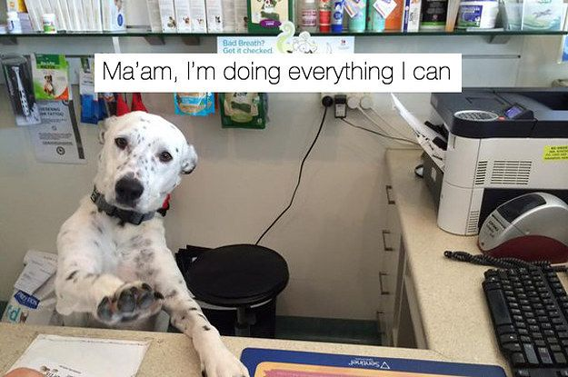 24 Tweets About Work That Are Never Not Funny Funny Animal Pictures Funny Dogs Funny Animals