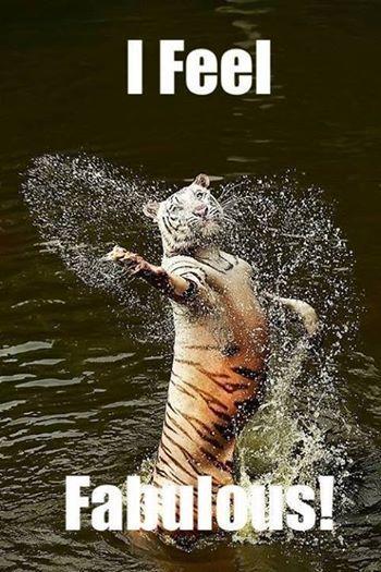 I feel fabulos! | Animals | Funny animal memes, Funny