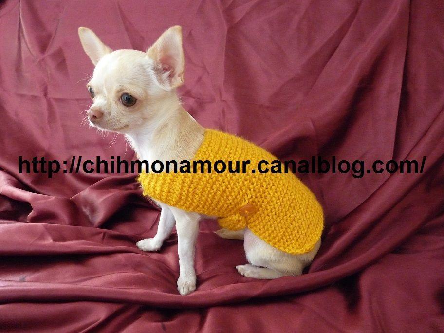 Tricoter un manteau pour petit chien crochet pinterest manteau pour petit chien tricot - Petit chien gratuit ...
