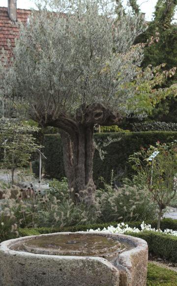 Tauschend Echt Die Doppelganger Mediterraner Pflanzen Mediterraner Garten Mediterrane Pflanzen Mediteraner Garten