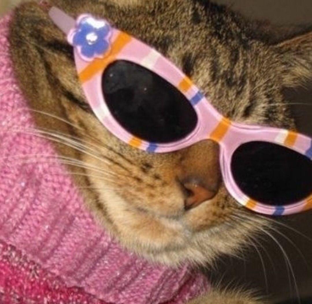 Aesthetic Cat With Sunglasses Funky Sunglasses Cat Sunglasses Black Cat