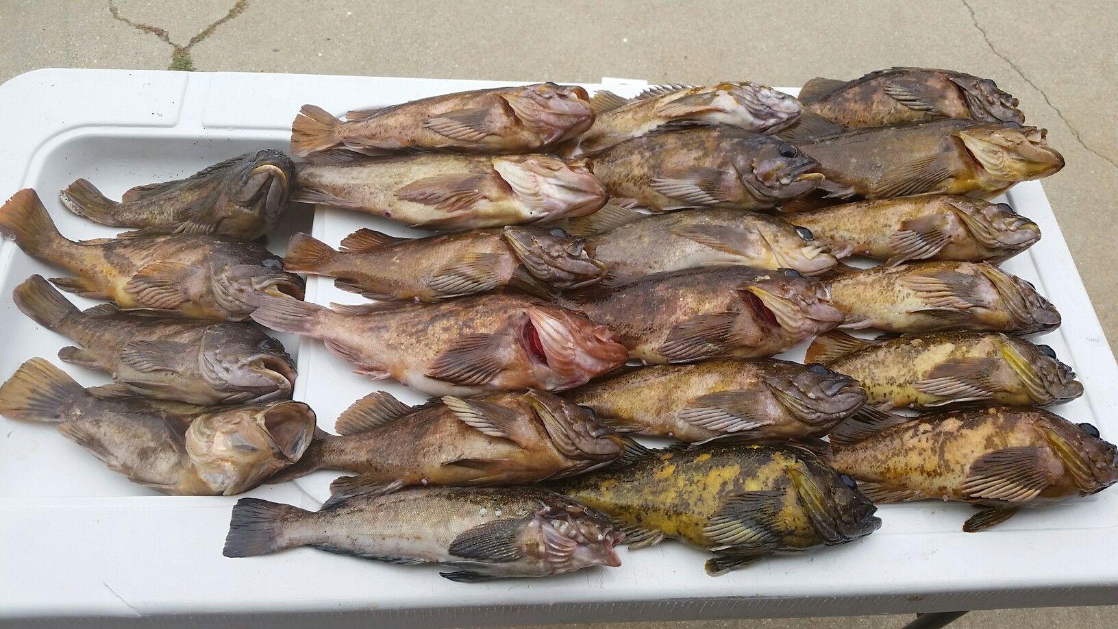 Kayak fishing fish pork food