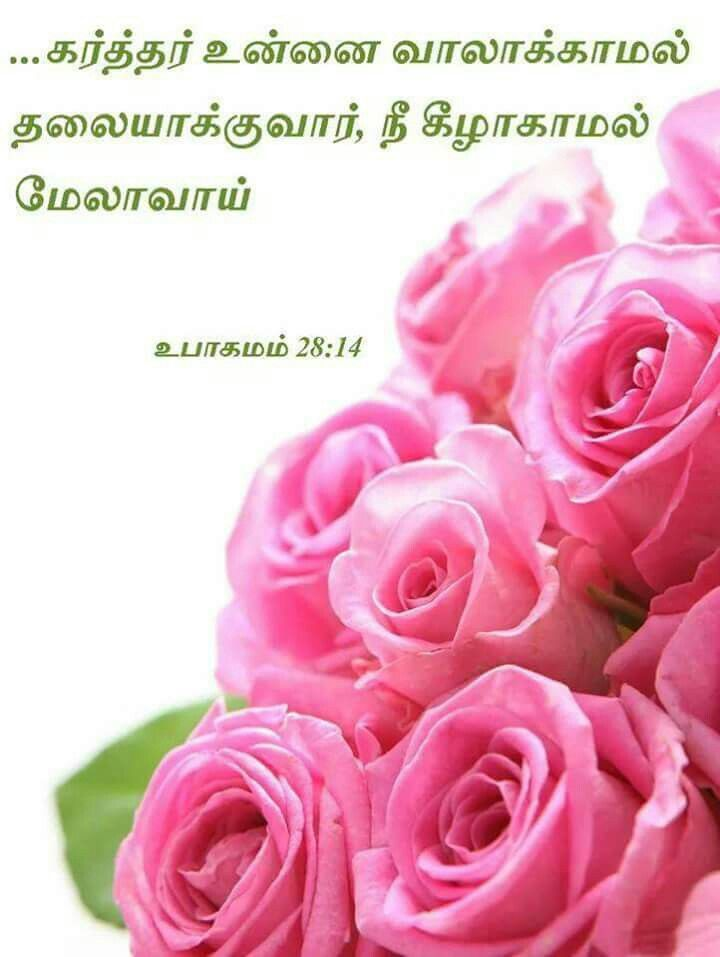 Pin By Jamila Rani On Tamil Bible Verse Purple Flowers Pink Roses Rose