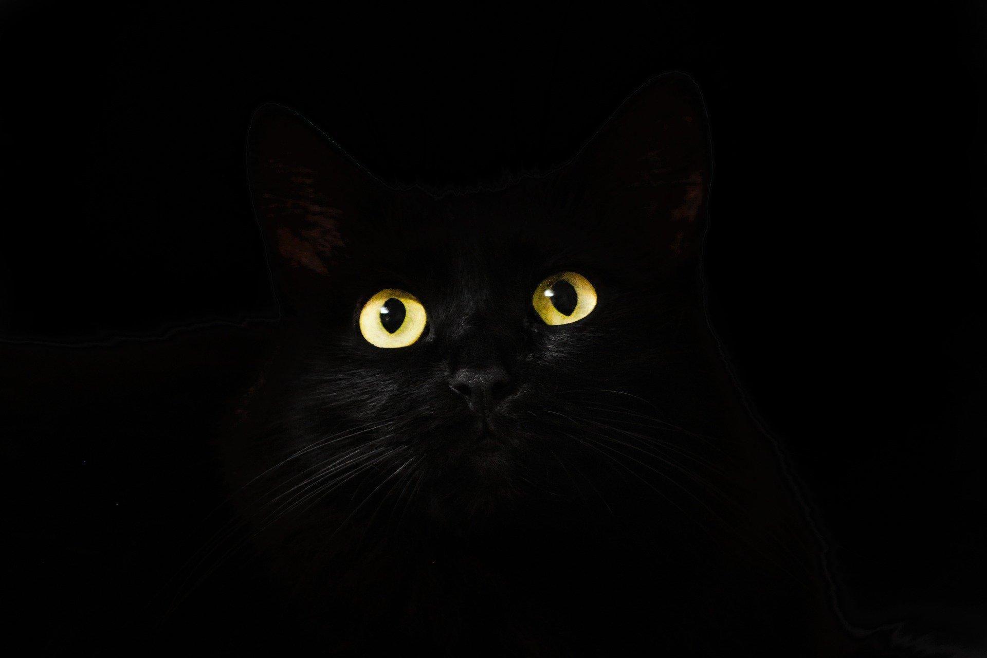 تفسير حلم عضة القطة تفسير حلم قطة تهاجمني وتعضني تفسير حلم القطط الكثيرة تفسير حلم القطط الصغيرة الملونة تفسير حلم ام En 2020 Fond D Ecran Chat Image Chat Animales