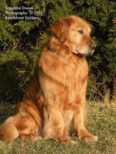Austin Most Beautiful Dog Breeds Beautiful Dog Breeds Dogs
