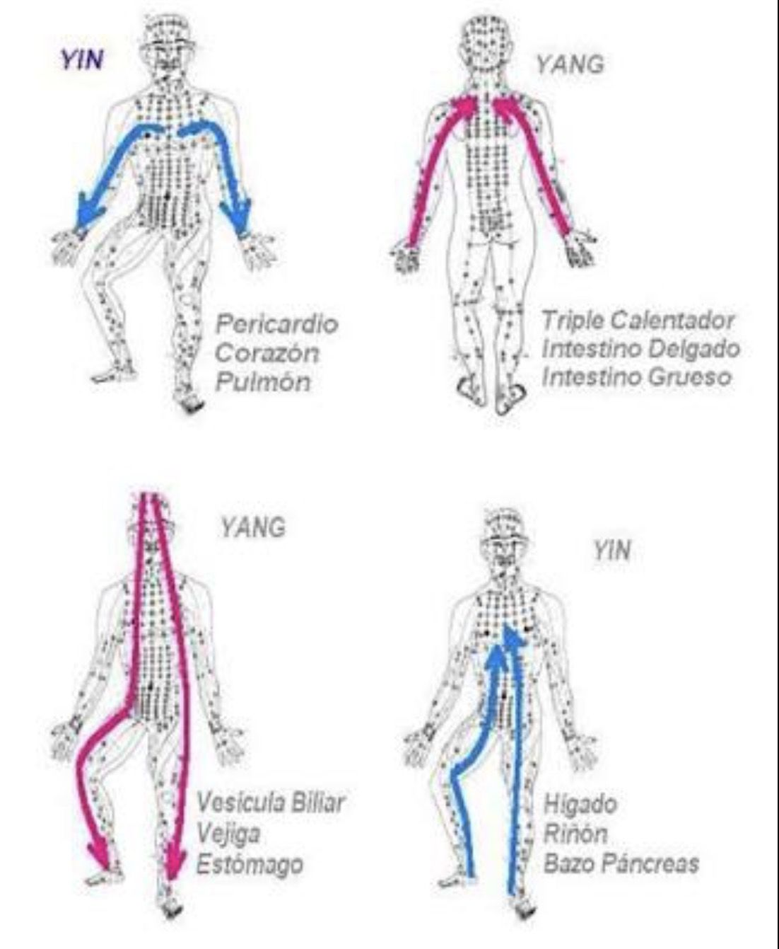 Pin By Bicky Davila On Acupuntura Pinterest Acupuncture Qi Gong