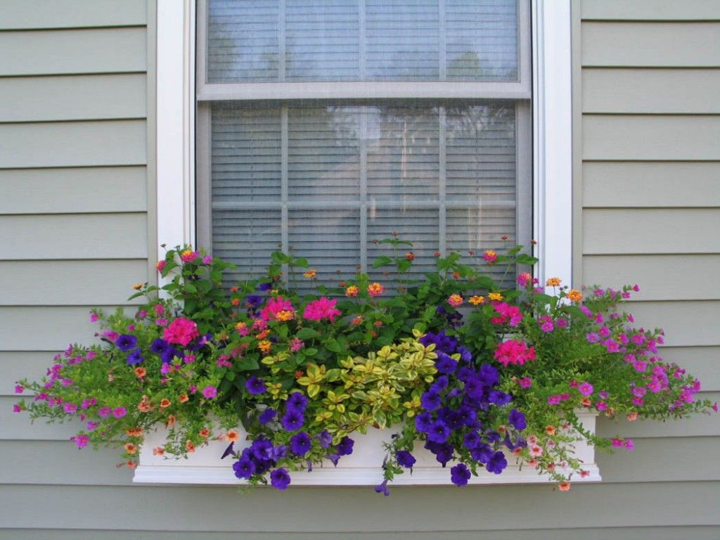 1000+ images about Window Box Ideas & Flowers on Pinterest ...