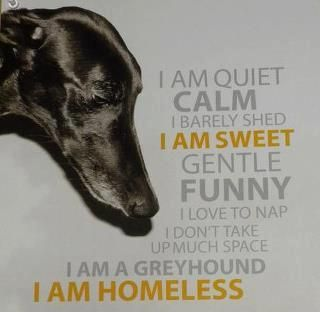 Who Can Resist Not Me Greyhound Rescue Grey Hound Dog Greyhound