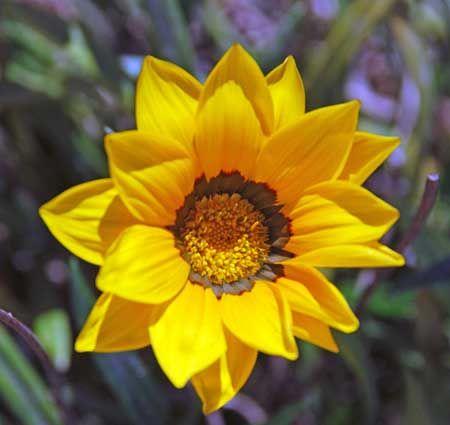 Pin De Talison Maciel Em Mages Garden Flowers E Plants