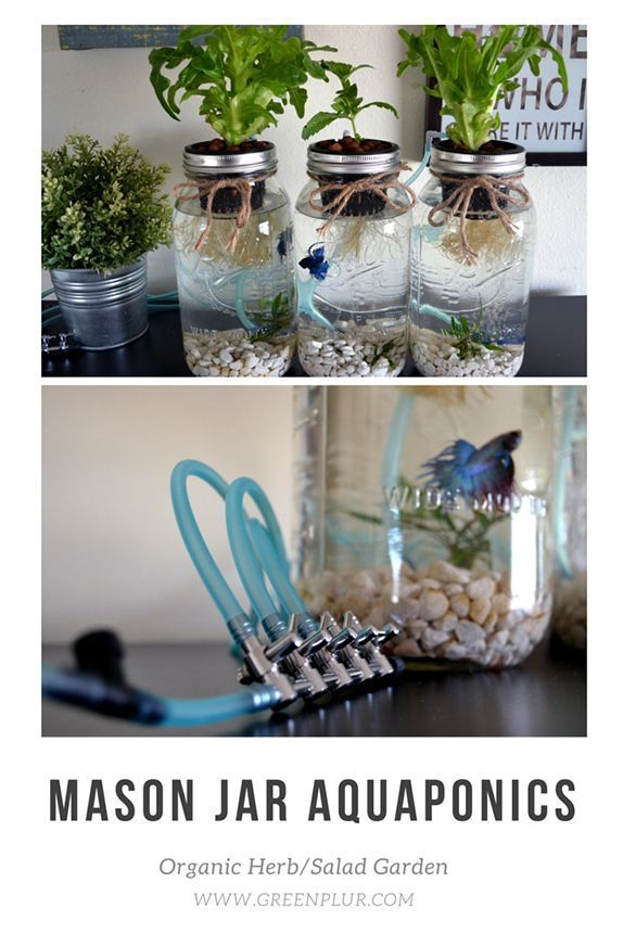 3 Mason Jar Aquaponics Kit - Build Your Own Hydroponics ...