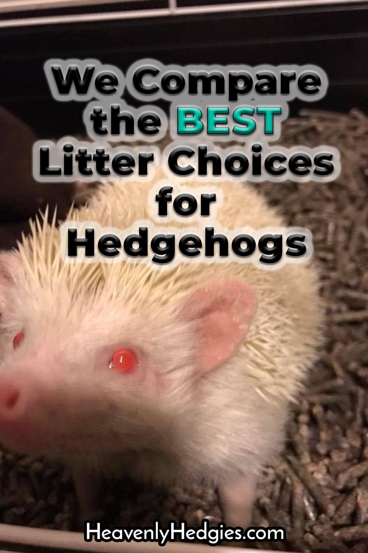 Hedgehog Litter Types Compared With Images Hedgehog Hedgehog