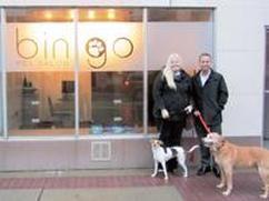 Bingo Pet Salon In Downtown Royal Oak Mi Opens To Bring A New Pet