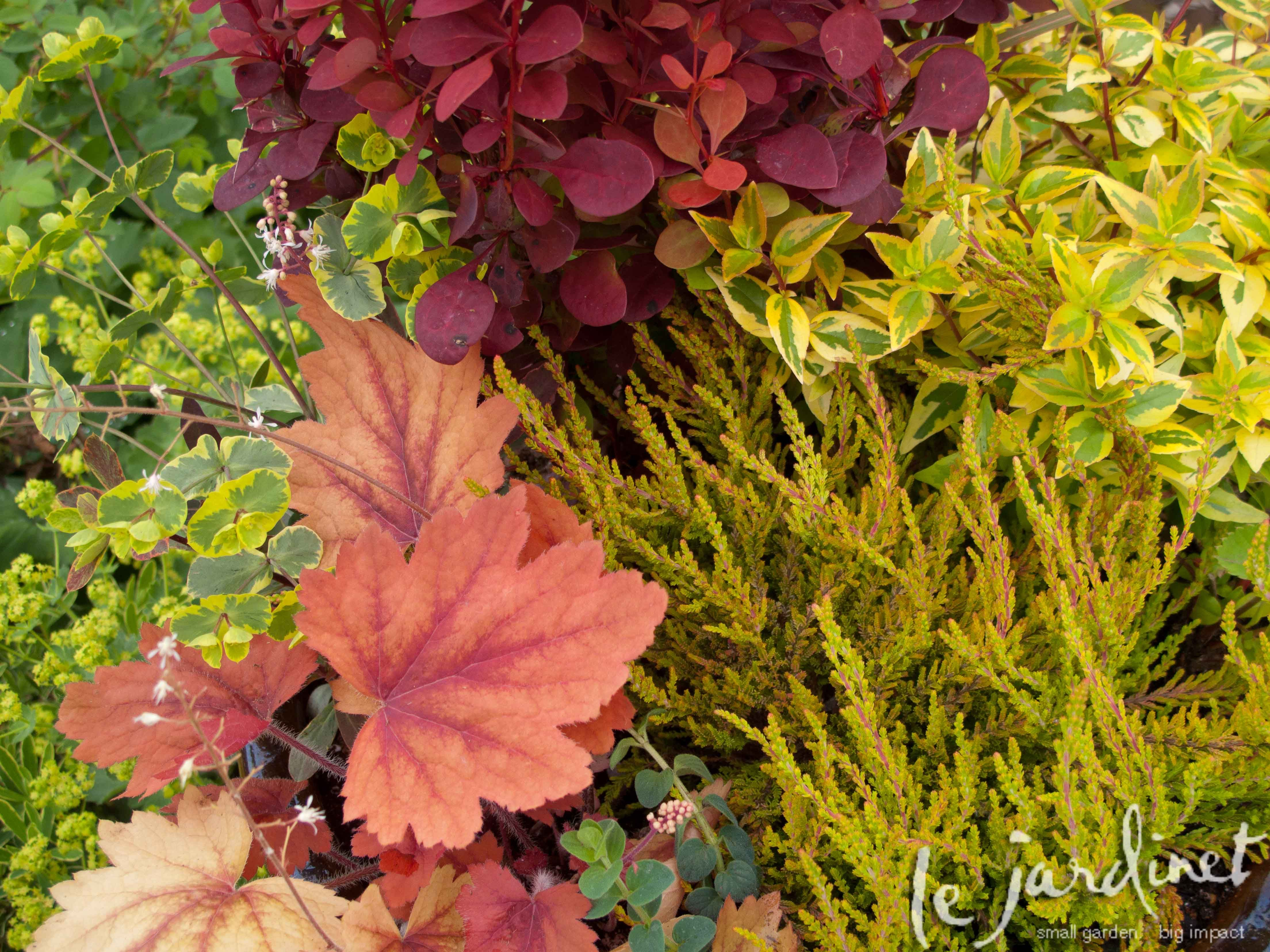 When it comes to color schemes for container gardens the only limitation is your imagination. To avoid the mad professor look it does help to have a plan before you hit the nurseries, however. In m…