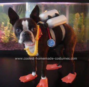 Coolest Dog Costume Boston Terrier Dog Boston Terrier Dog