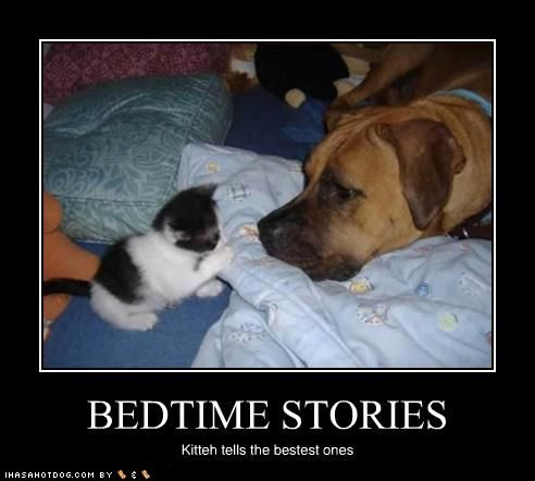 Funny Dog Stories Kittens Cutest Funny Dogs Dog Stories