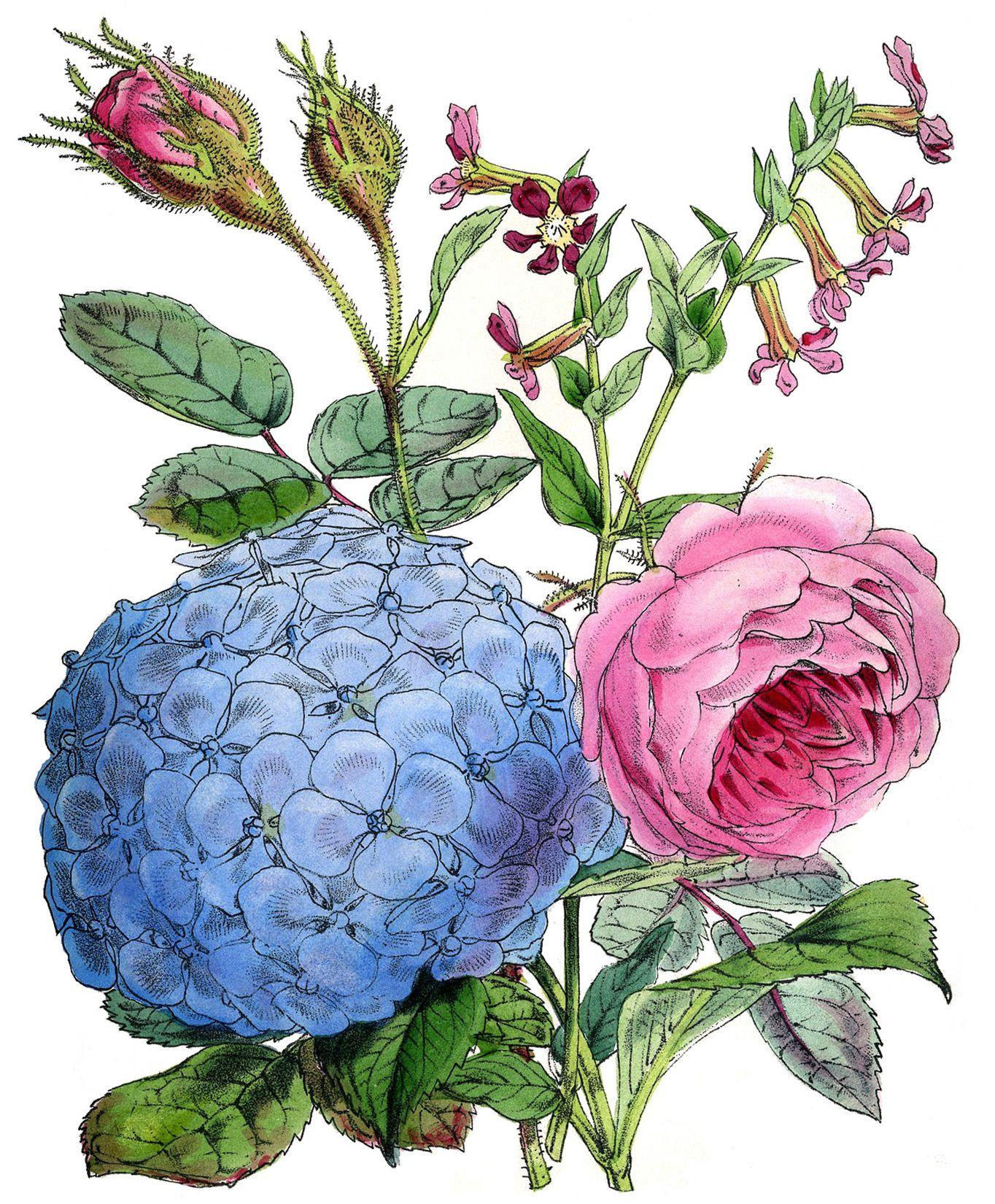 10 free vintage roses images gorgeous yaz fonlar 1 ettiketten stempel ve malen - Pfingstrosen dekoration ...