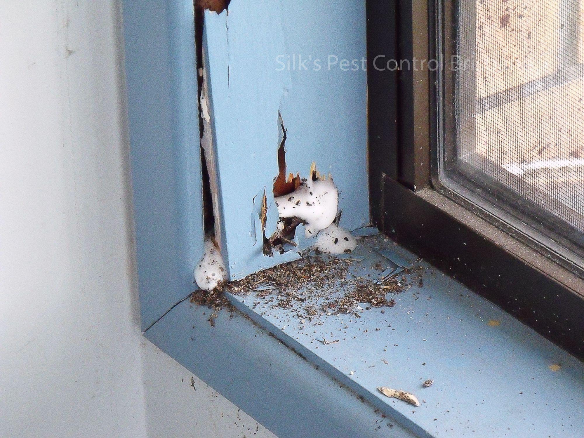 Silk S Pest Control Taringa Termite Pest Control Experts Termite Inspection Pest Inspection Termite Pest Control