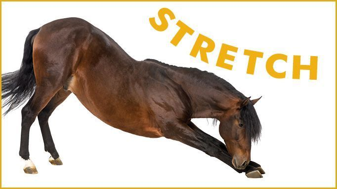 Stretches for Your Horse and the Benefits They Have