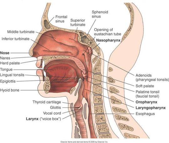 Like: meddaily   Anatomie   Pinterest