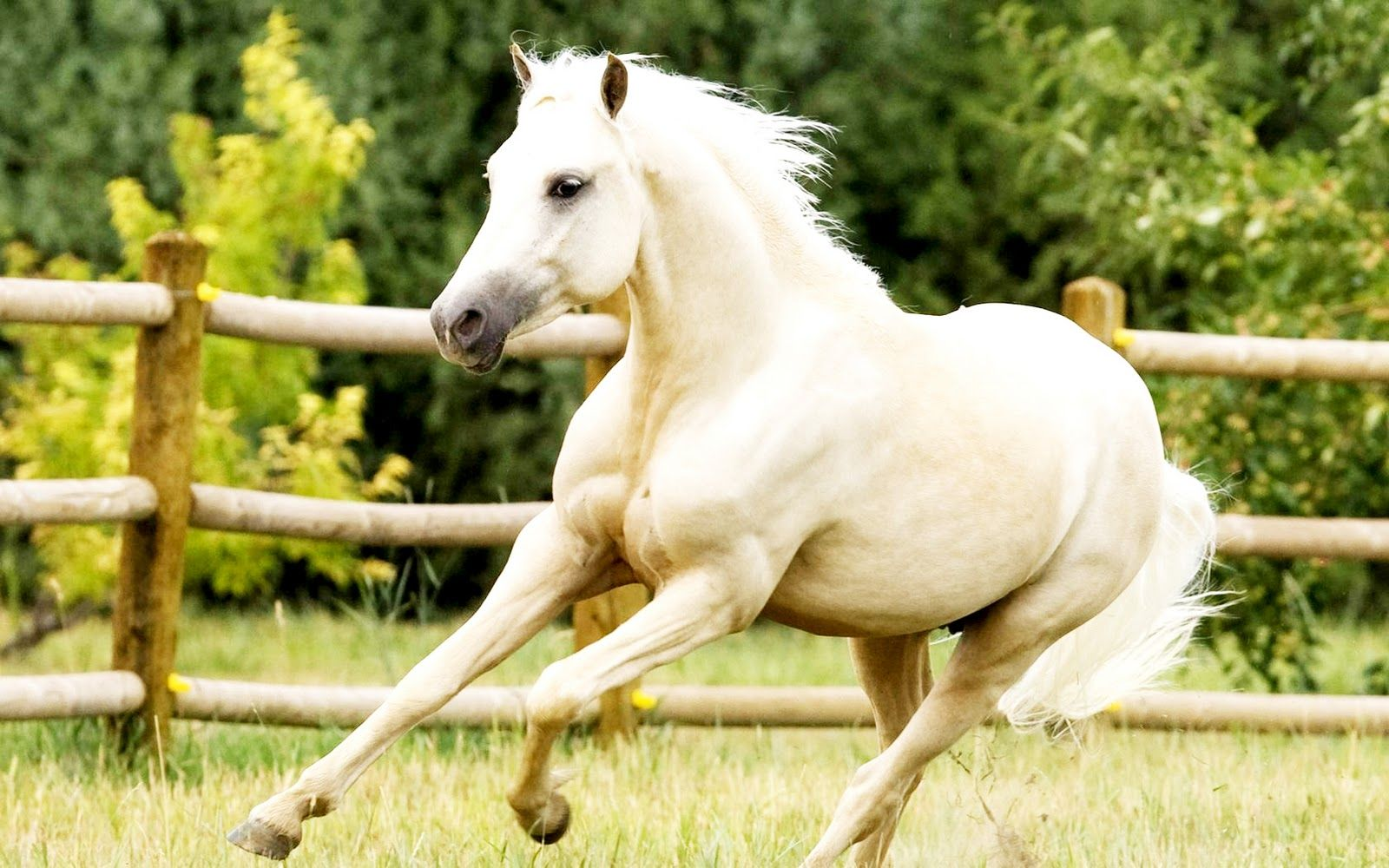 White Horse Beach White Horses Hd Wallpapers Download Free