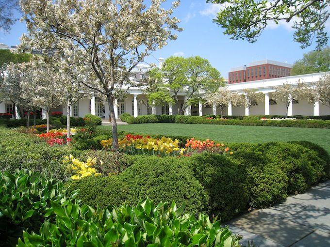 White House Rose Garden Spring