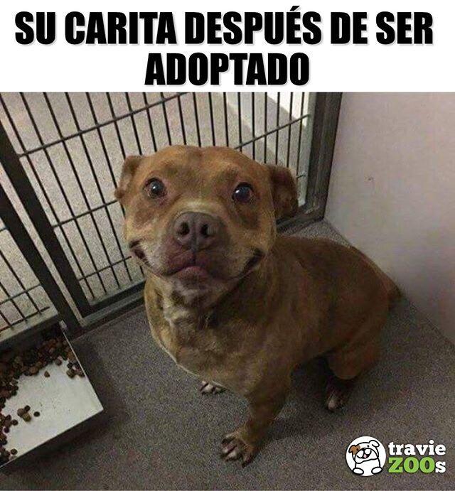 No Cabe De La Felicidad Perro Pitbull Dogs Adopcion Felicidad Perros Graciosos Amor De Perro Animales Adorables