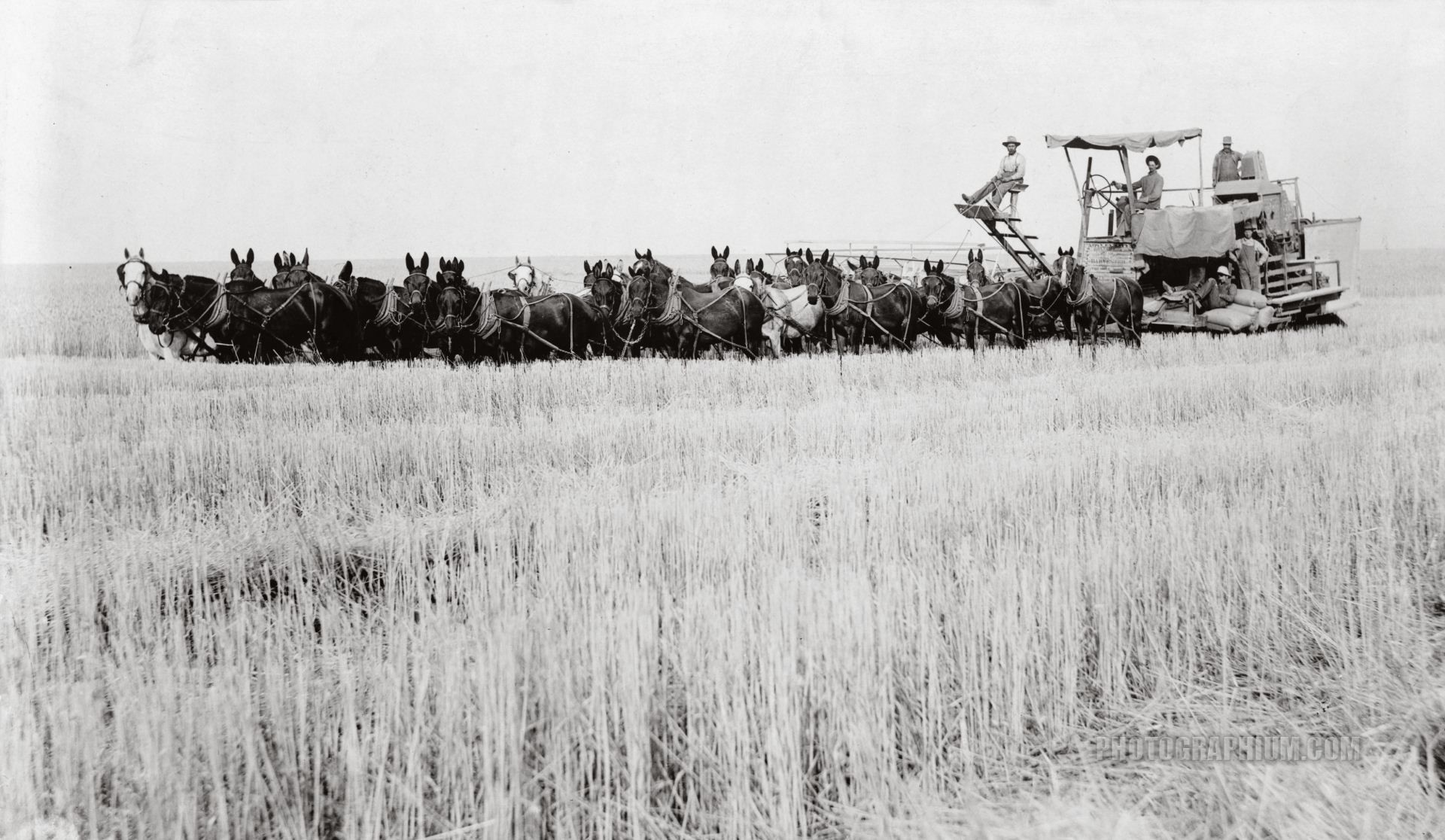 Harvesting Wheat: Spokane, Washington 1910
