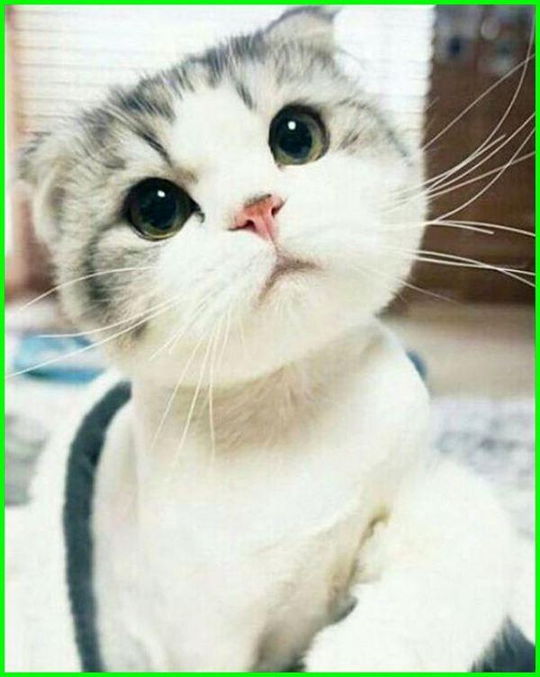 Ekspresi Wajah Kucing Tanda Tidur Terkejut Sedih Foto Marah Saat Selfie Senang Lucu Paling Ngakak Gambar Kucing Lucu Foto Kucing Lucu Kucing Lucu