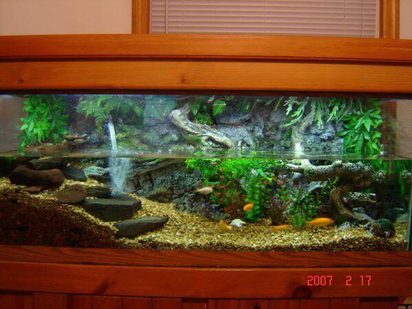 The Perfect Turtle Tank Setup Turtle Tank Setup Turtle Tank Turtle Terrarium