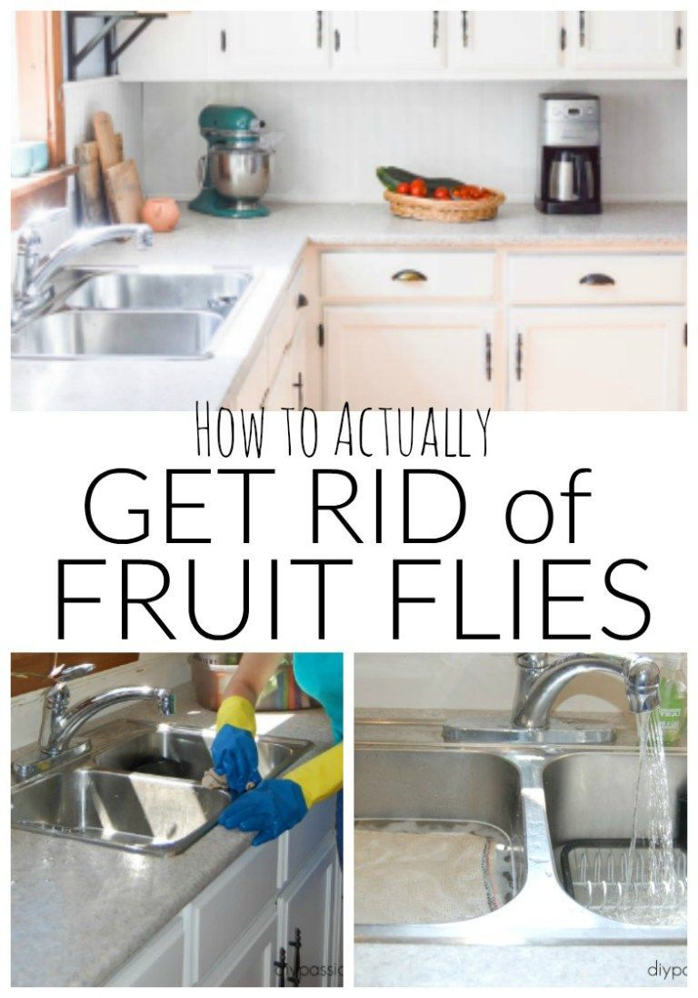 How to actually get rid of fruit flies without leaving red wine or
