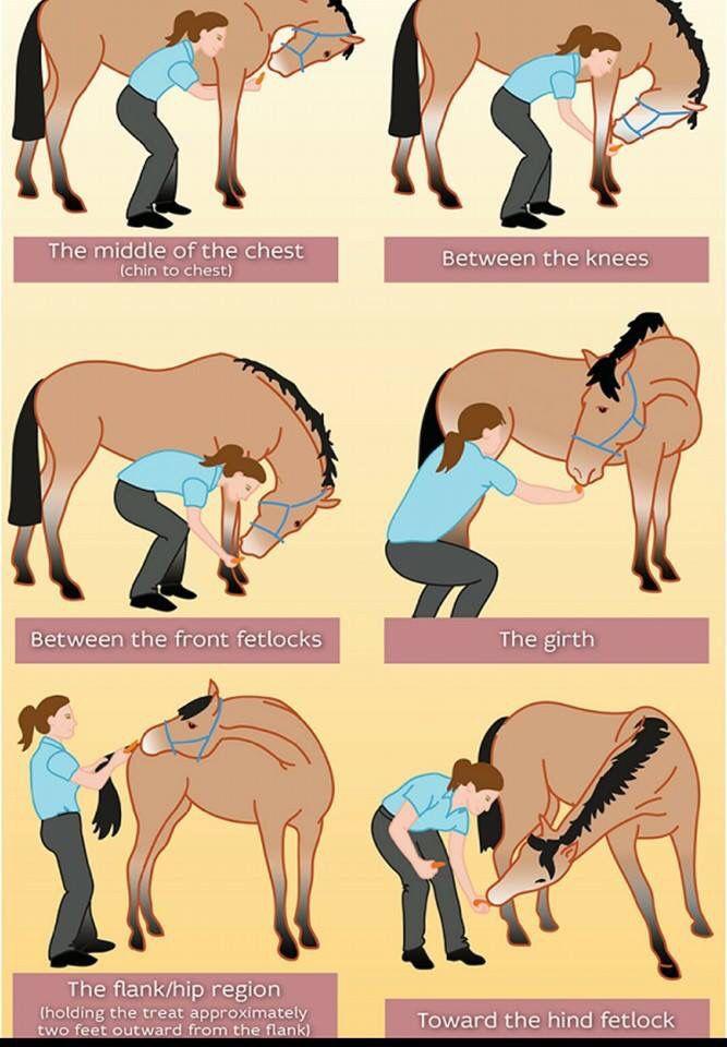 Leuke oefeningen om ze lekker flexibel te houden. En een goed excuus om te verwennen hihi..