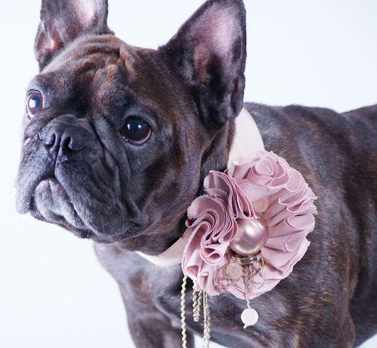 We love… nuestras mascotas en la boda y luciendo este collar porta alianzas de de Noel et Chloé dog boutique  atelier ¡se ven increíbles!