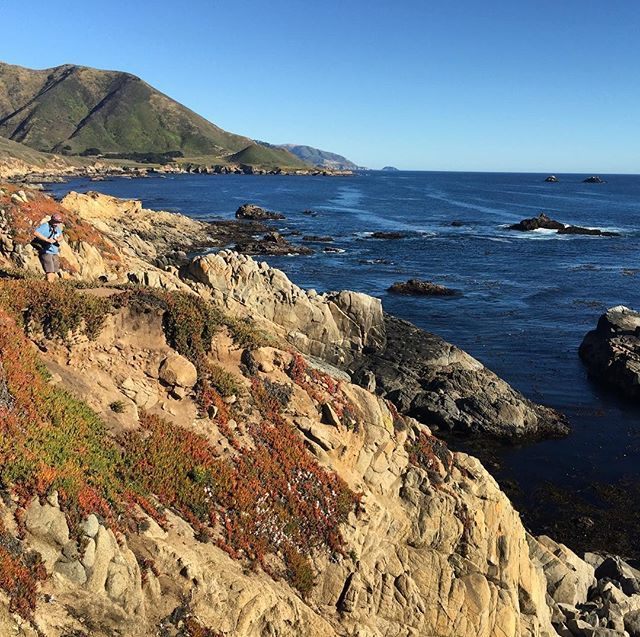 #wild #poppies #sea #bigsur #instanature #calocals - posted by Etana Jacobson https://www.instagram.com/etanaj - See more of Big Sur, CA at http://bigsurlocals.com